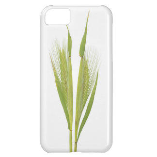 Wild barley (hordeum) iPhone 5C case