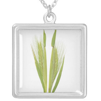Wild barley (hordeum) silver plated necklace