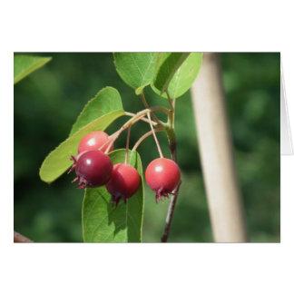 Wild Berries Card