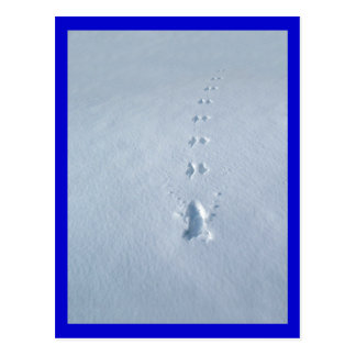 Wild Bird Footprints in Snow Postcard
