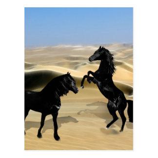 Wild black beauty horses postcard