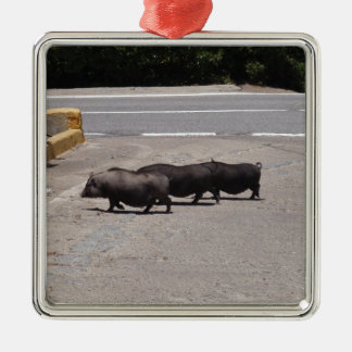 Wild Black Pigs Christmas Ornament