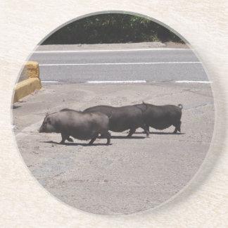 Wild Black Pigs Coaster