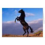 Wild Black Stallion Rearing Horse Greeting Card