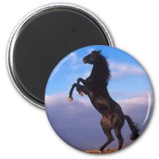 Wild Black Stallion Rearing Horse Magnet
