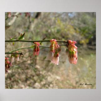 Wild Blueberry Flowers Print