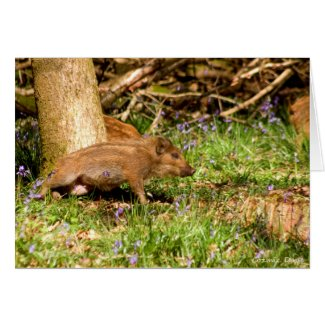 Wild Boar Piglet Card
