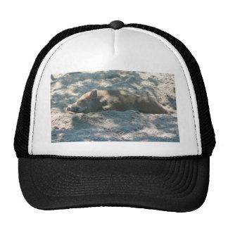 Wild Boar Piglet Trucker Hat