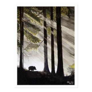 Wild Boar Post Card