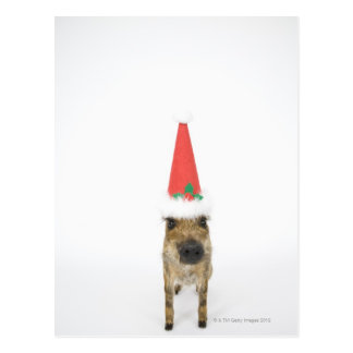 Wild boar with Christmas hat Postcard