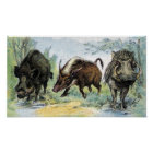 Wild Boars Poster