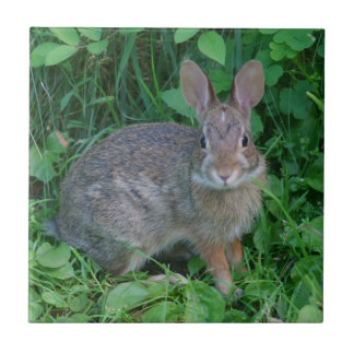 Wild Brown Rabbit Animal Small Square Tile