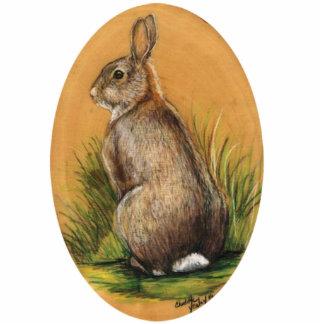 Wild Bunny Rabbit Pin Photo Cut Outs