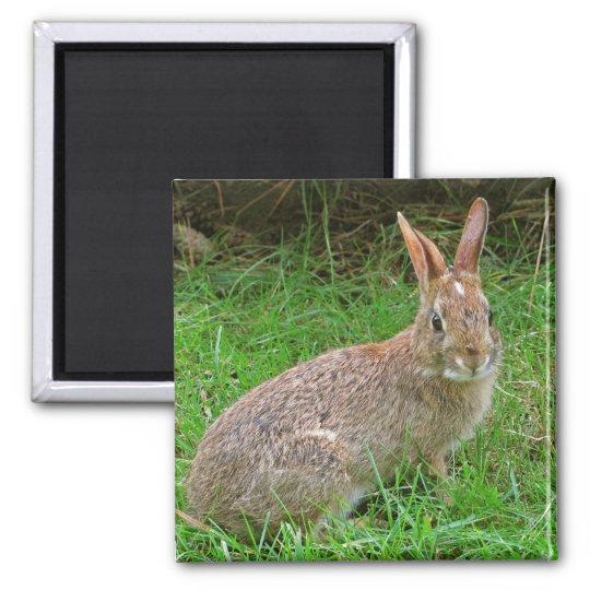 Wild Bunny Square Magnet