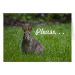Wild Bunny Valentine Greeting Card