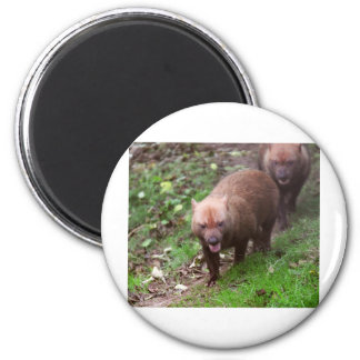 Wild Bush dogs walking 6 Cm Round Magnet