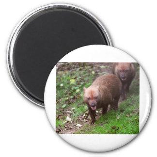 Wild Bush dogs walking 6 Cm Round Magnet