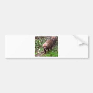 Wild Bush dogs walking Bumper Sticker