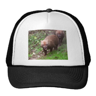 Wild Bush dogs walking Cap