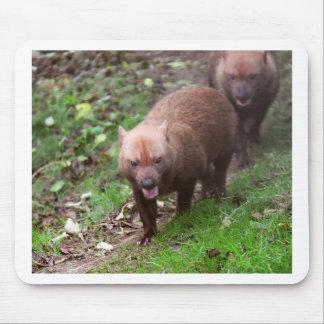 Wild Bush dogs walking Mouse Mat