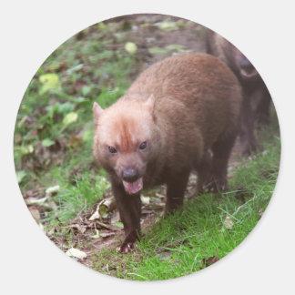 Wild Bush dogs walking Stickers