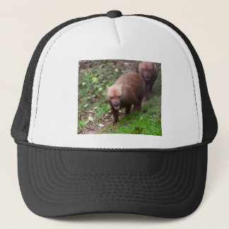 Wild Bush dogs walking Trucker Hat