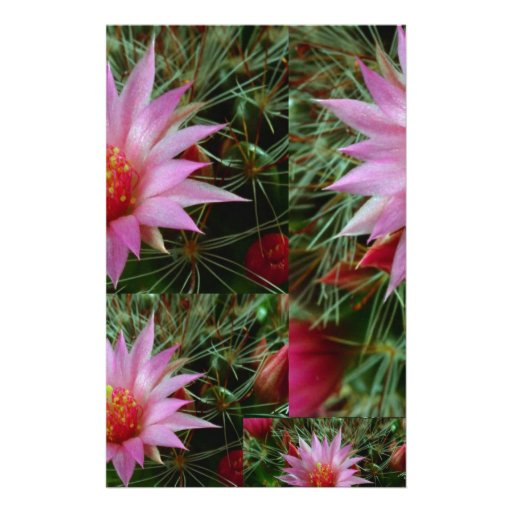 Wild CACTUS Flower Show :  Exotic Pink Greetings Stationery Paper