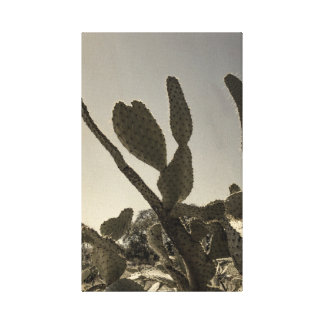 Wild Cactus in Texas Canvas Print