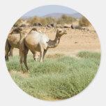 Wild Camels Classic Round Sticker