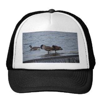 Wild Canada Geese Cap