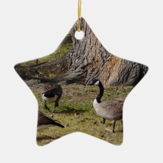 Wild Canada Geese Ceramic Star Decoration