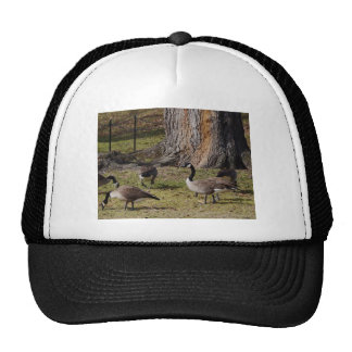 Wild Canada Geese Hat