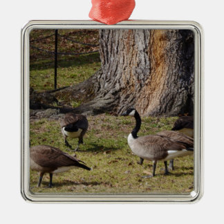 Wild Canada Geese Silver-Colored Square Decoration