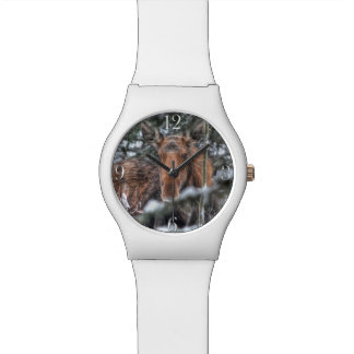 Wild Canadian Moose in Winter Forest Watches