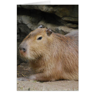 Wild Capybara Greeting Card