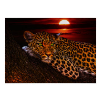 Wild Cat Leopard Poster