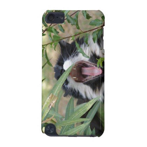 Wild cat roar iPod touch 5G case