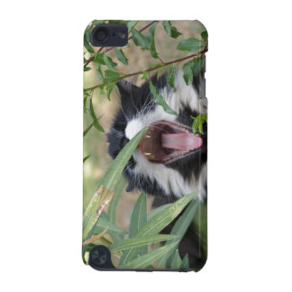Wild cat roar iPod touch 5G covers