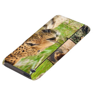 wild cats iPod Case-Mate cases