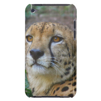 Wild Cheetah iTouch Case Barely There iPod Case