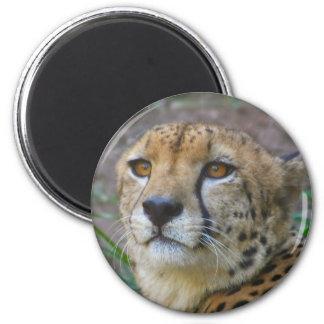 Wild Cheetah Magnet