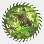 Wild Coati Stickers