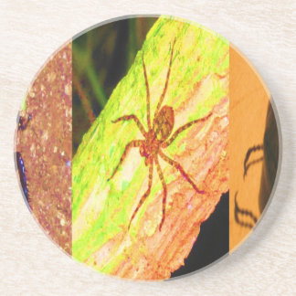 Wild Costarica - Spiders, Cockroaches and Insects Beverage Coasters