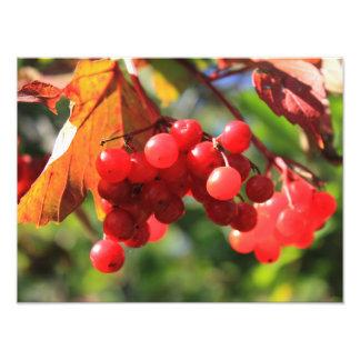 Wild Cranberries Photo Art