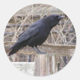 Wild Crow Sticker
