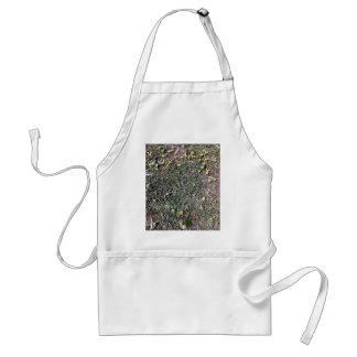 Wild daisy growing in field beside a church standard apron