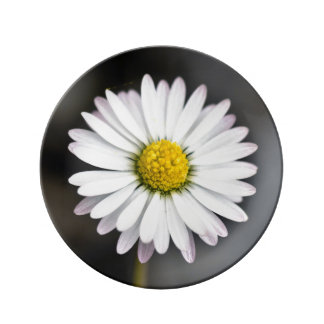 Wild daisy white and yellow plate