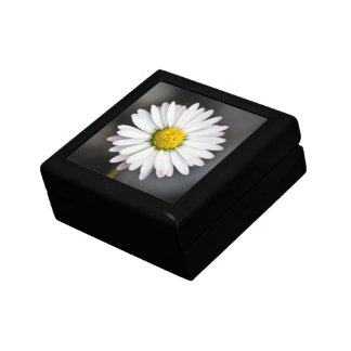 Wild daisy white and yellow small square gift box