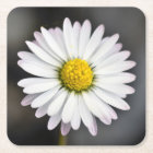 Wild Daisy White and Yellow Square Paper Coaster