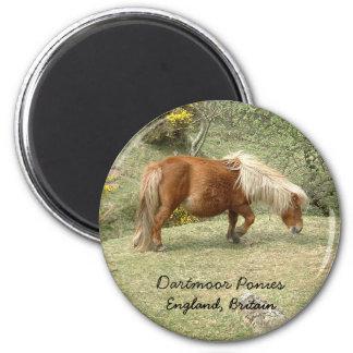 Wild Dartmoor Pony, England, UK (Magnet) 6 Cm Round Magnet